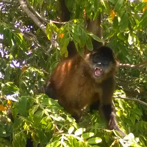 Watch monkeys from the boat during the islands tour